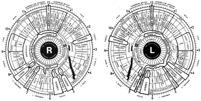 iridologychart